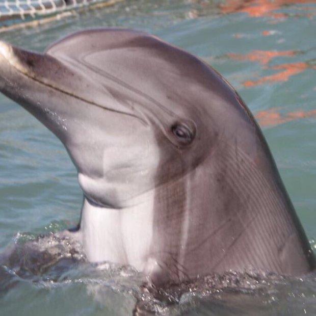 semarnat-vaquita-estacion-10 Inicia plan de rescate de vaquita marina con apoyo de delfines