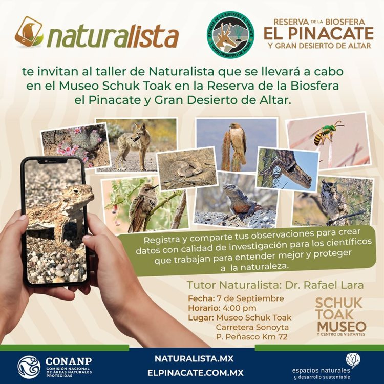 pinacate-7sept-pinacate-taller Naturalist Workshop @ Pinacate Sept. 7