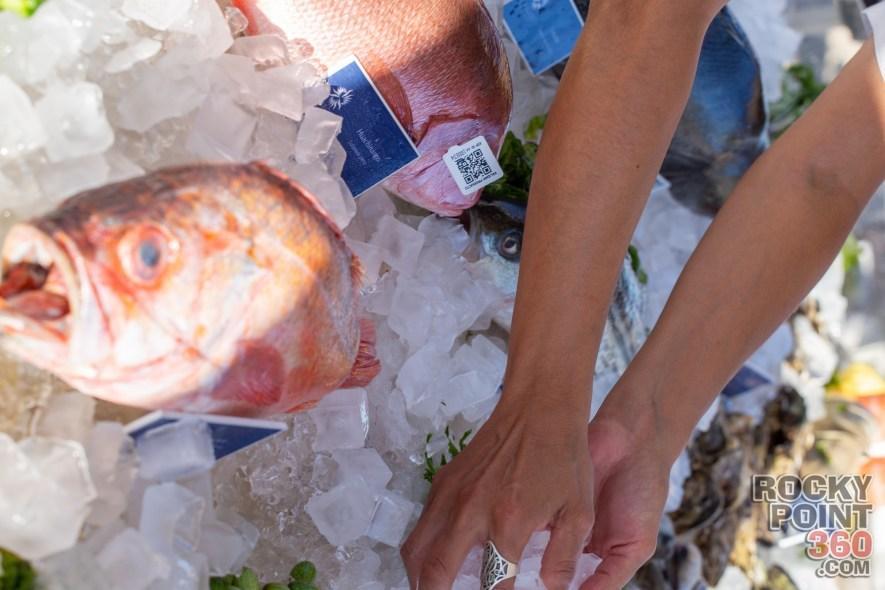 Gastro-Fest-638-69 Gastro Fest 638 - gallery