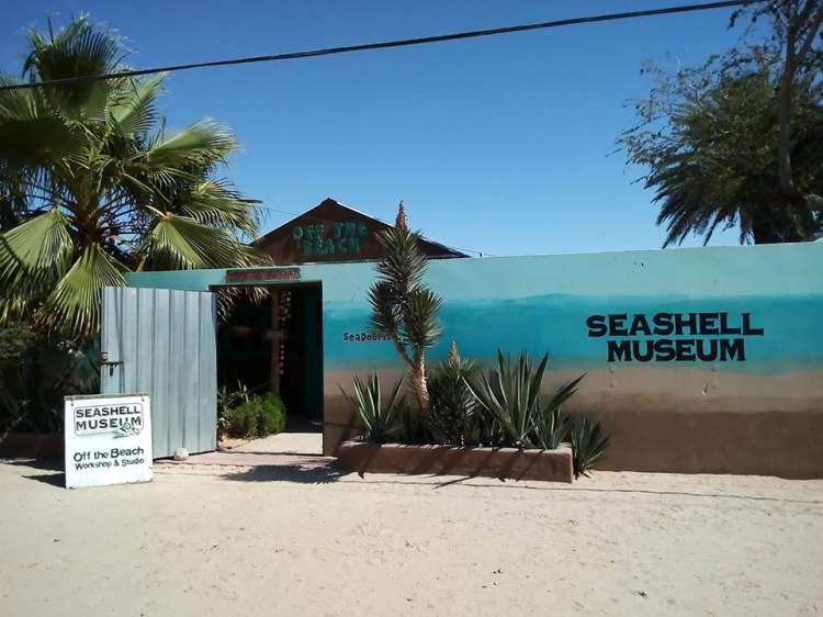 seashell-museum Color the town! Rocky Point Weekend Rundown!