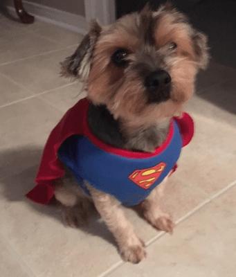 SupermanRocky