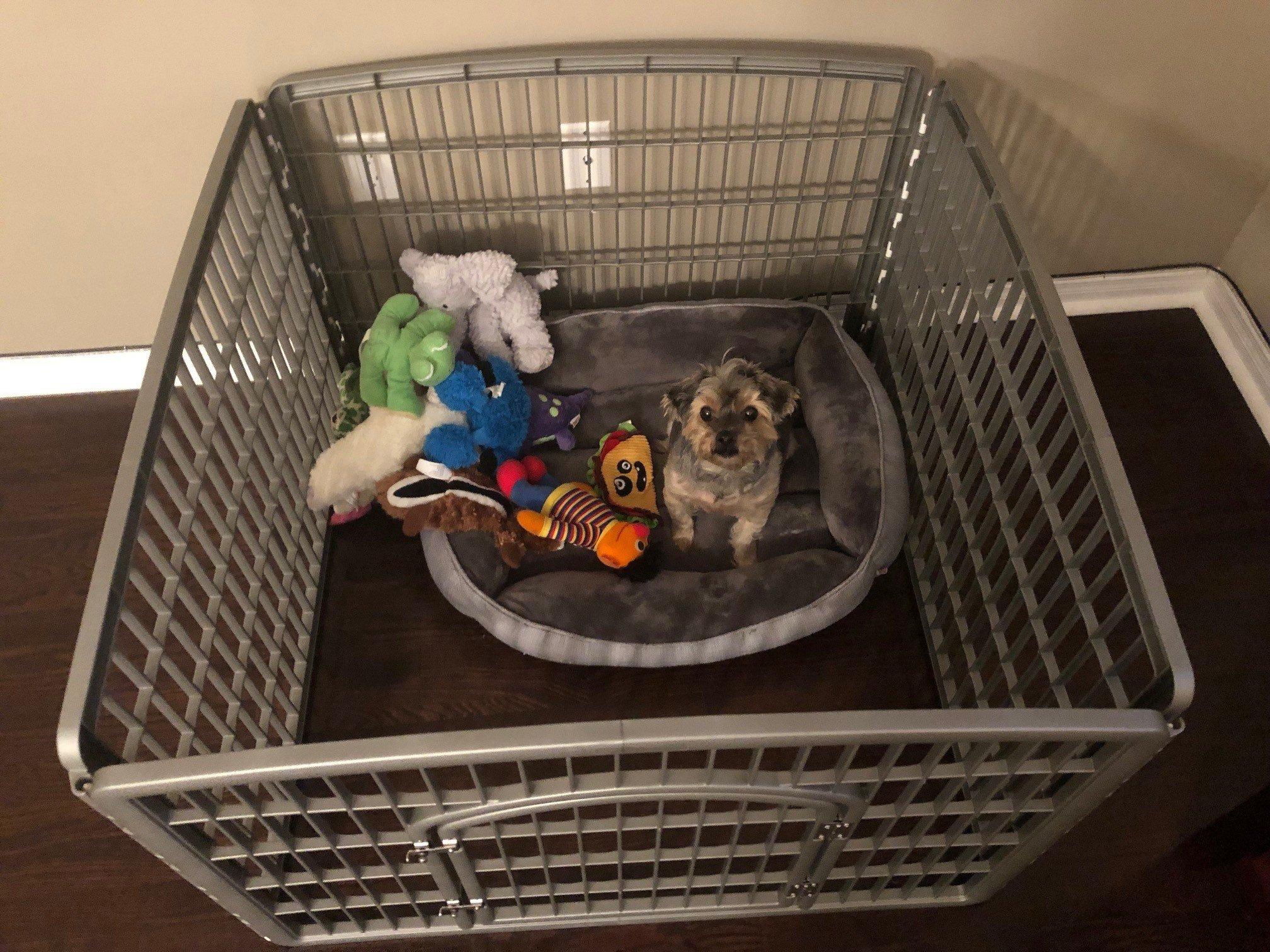 Dog Playpen Review – IRIS Dog Pen - Rocky's Journal