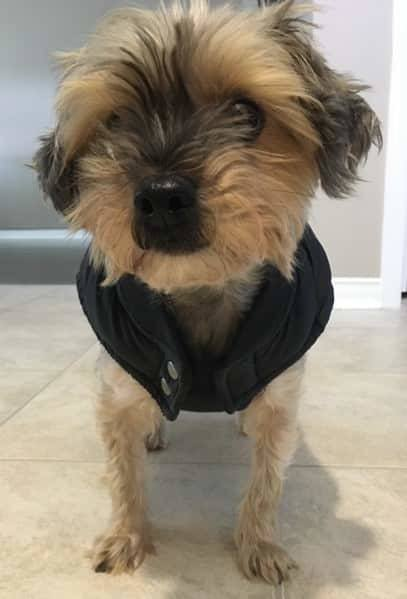 Winter Coats for dogs 2