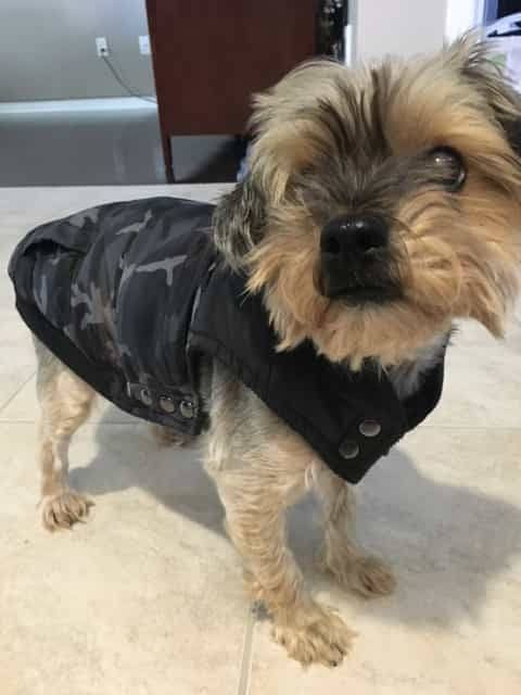Winter Coats for dogs 3