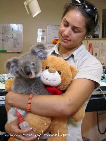 KoalaIUC
