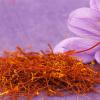 Wholesale Saffron Bulbs (Crocus Sativus) - Buy Saffron ...