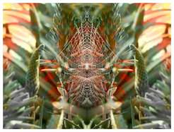 Aloe Web