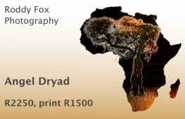 Angel Dryad Price