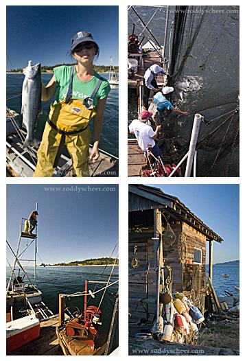 Lummi Island reefnet fishing