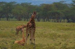 Lake Nakuru National Park (100)