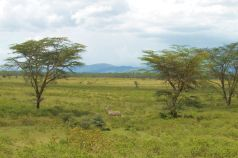 Lake Nakuru National Park (118)