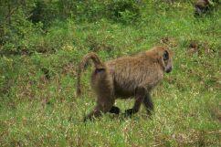 Lake Nakuru National Park (122)