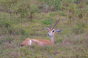 Lake Nakuru National Park (130)