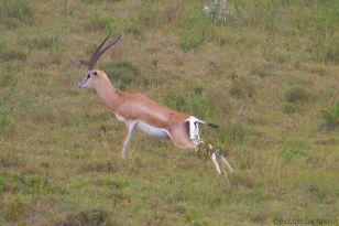 Lake Nakuru National Park (131)