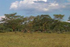 Lake Nakuru National Park (138)