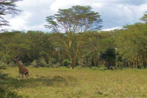 Lake Nakuru National Park (139)