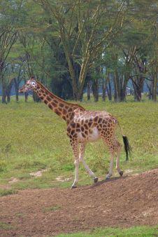 Lake Nakuru National Park (145)