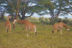Lake Nakuru National Park (148)