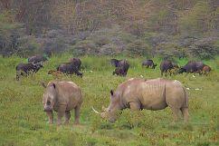 Lake Nakuru National Park (152)