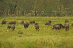 Lake Nakuru National Park (156)