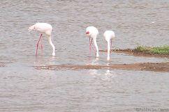 Lake Nakuru National Park (163)