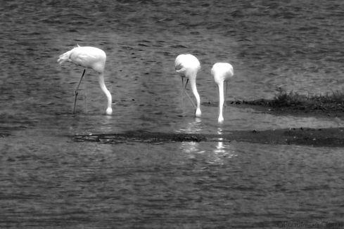 Lake Nakuru National Park (164)