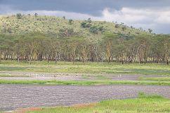 Lake Nakuru National Park (166)