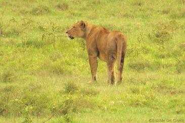 Lake Nakuru National Park (179)