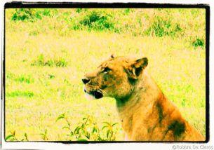 Lake Nakuru National Park (186)