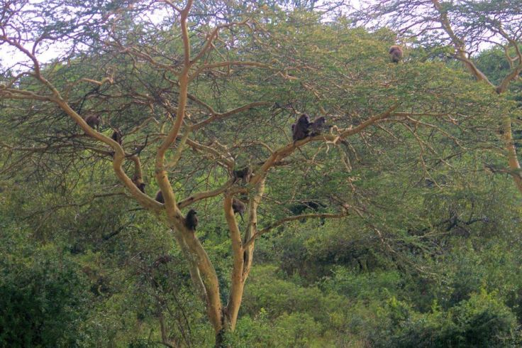 Lake Nakuru National Park (191)