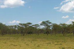 Lake Nakuru National Park (99)