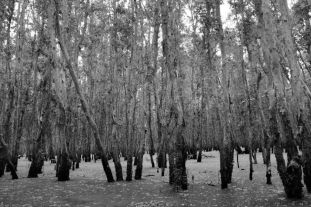 Mangrove (22)