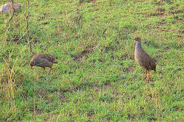 Masai Mara National Reserve (10)
