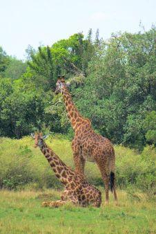Masai Mara National Reserve (102)