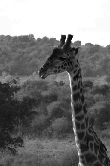 Masai Mara National Reserve (14)