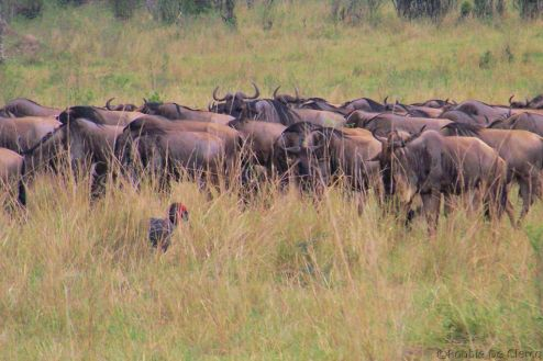 Masai Mara National Reserve (146)