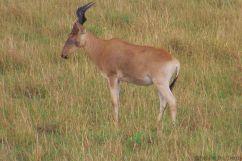 Masai Mara National Reserve (156)