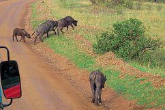 Masai Mara National Reserve (17)