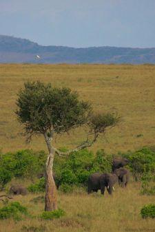 Masai Mara National Reserve (185)