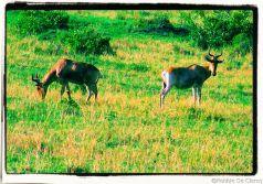 Masai Mara National Reserve (190)