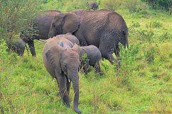 Masai Mara National Reserve (39)