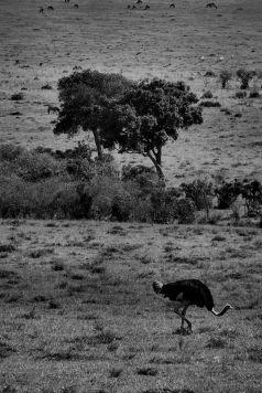 Masai Mara National Reserve (69)