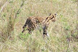 Masai Mara National Reserve (90)