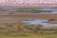Ngorongoro (26)