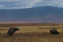Ngorongoro (33)