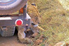 Ngorongoro (44)
