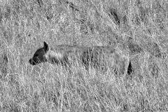 Serengeti National Park (109)