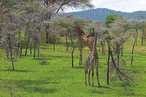 Serengeti National Park (12)