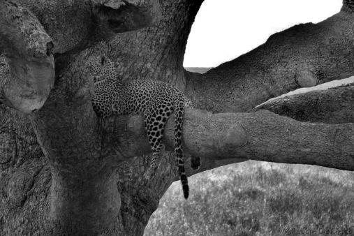 Serengeti National Park (120)