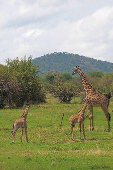 Serengeti National Park (14)